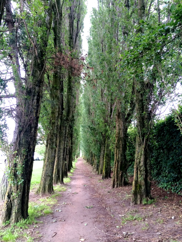 During one of my runs in Honfleur, I found this path through the trees that led to the ocean.