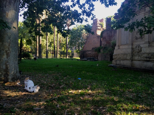 A park filled with feral cats and ruins.