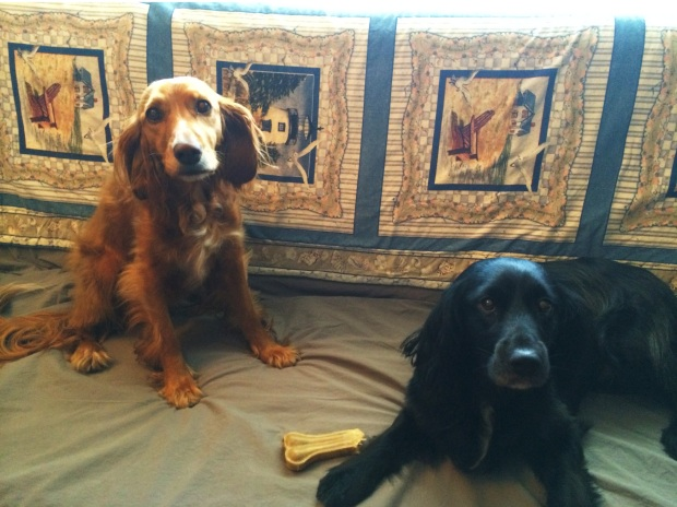 Our dogs for the month, Frimeuse and Leo.