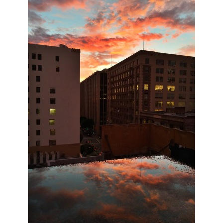 Bonus pic: it rained that day and I took this picture on the roof of my work building downtown. The sunset was so cool.