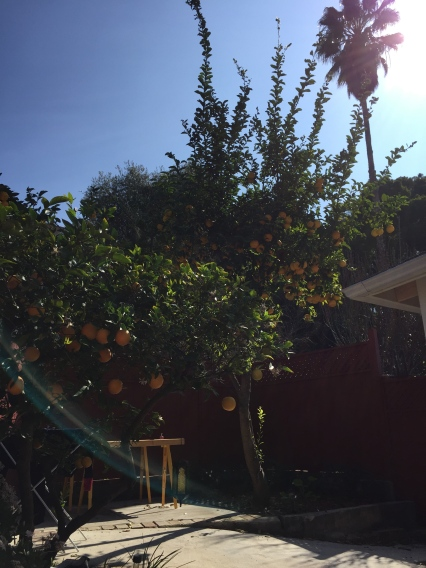 Our cute little backyard, with lots of citrus fruits on the tree.